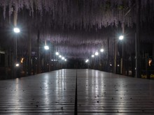Empty Pathway Along Lit Lamp P...