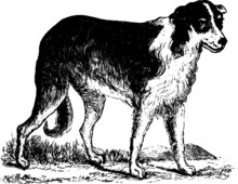 Vintage Pet Shepard Dog