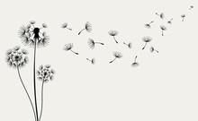 Hand Drawn Of Dandelions. Vect...