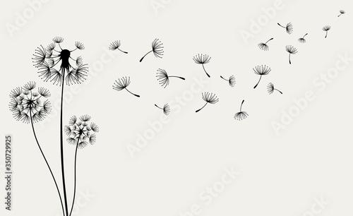 Photo Hand drawn of Dandelions. Vector illustration