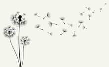 Hand Drawn Of Dandelions. Vect...