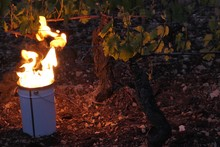 Fire In Bucket At Vineyard