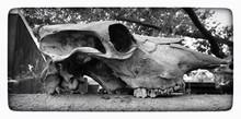 Prehistoric Skull In Park