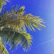 Leinwanddruck Bild - Coconut Tree Against Sky