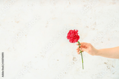 Female hand with beautiful carnation flower on light background