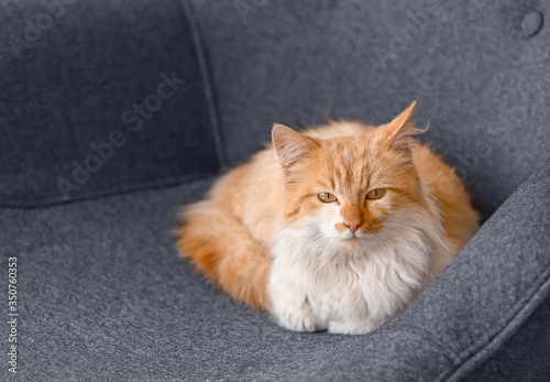 Cute funny cat on armchair