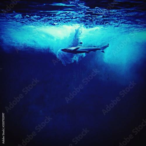 Underwater View Of Shark Swimming Fototapeta