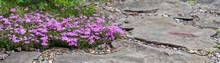 Floral Background With Violet ...