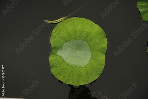 Valokuva Directly Above Shot Of Lily Pad Floating On Lake