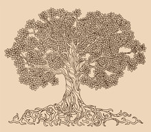 Lush Tree Drawing Vector. A Family Tree With Many Leaves, Branches And Roots.