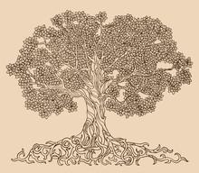 Lush Tree Drawing Vector. A Fa...