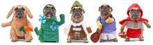 Funny Dog Costume Variations W...