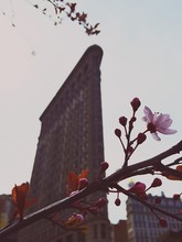 Low Angle View Of Cherry Blossom Against Flatiron Building Against Sky