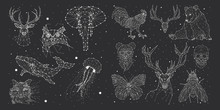Constellations Deer, Bison, El...