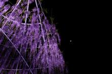 Purple Flowering Plant Against...