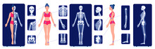 A Skeletal System Visual Aid. ...