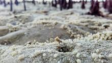 Close-up Of Crab Holes At Beach