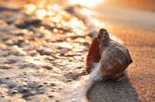 Seashell On Sunset Beach Backg...