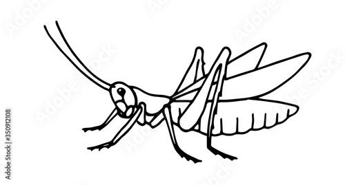 Photo decorative grasshopper, invertebrate insect, voracious locust, vector illustrati