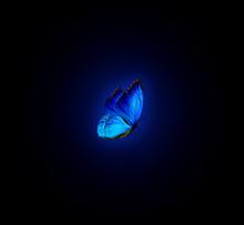 Blue Havana