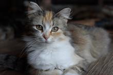 Close Up Of A Farm Cat