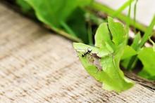 Close-up Of Ant On Damaged Leaf