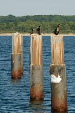 Cormorants Perching On Pole In Sea