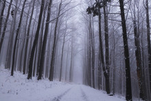 Winter Unmaintained Forest Road From The Realm Of Dreams With A Magical And Unforgettable Atmosphere On The Edge Of Beskydy Mountains, Czech Republic, Europe. Winter Fog. Haze Is Gorgeous