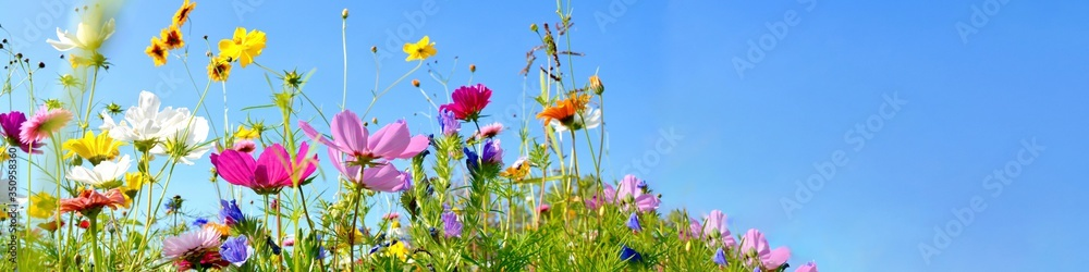 Fototapeta colorful wildflower meadow with blue sky and sunshine - floral summer background banner with copy space
