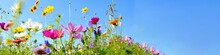 Colorful Wildflower Meadow Wit...