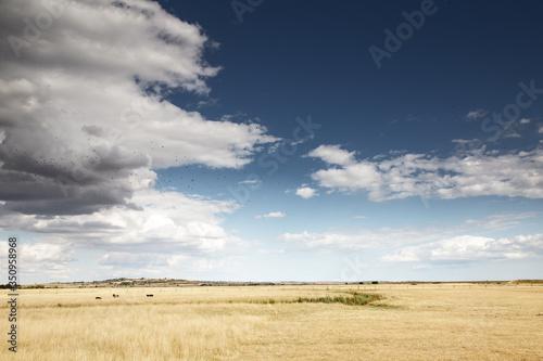beautiful farmland in essex england Fototapeta