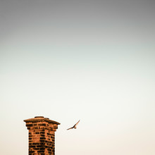 Pigeon Flying By Chimney In Sky