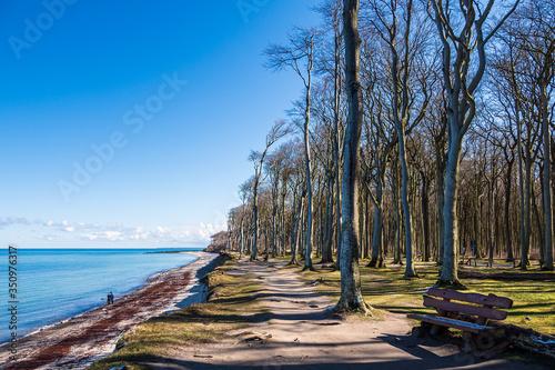 Photo Gespensterwald an der Küste der Ostsee in Nienhagen