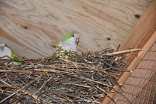 High Angle View Of Parrot In N...