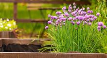 Gardening. Beautiful Blooming ...