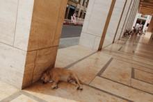 Dog Sleeping In Street