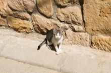 Cat On The Street