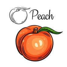 Peach Vector Drawing Icon