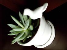 Succulent In Pot With Bird Figurine