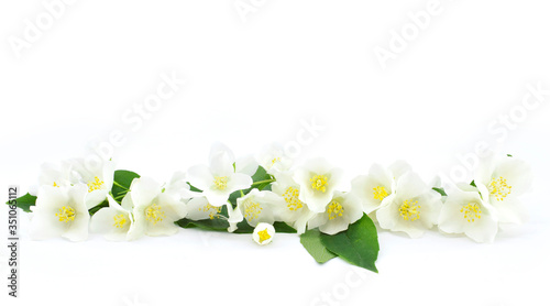 Delicate jasmine flowers with leaves isolated on a white background Wallpaper Mural