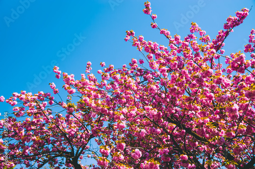 Foto Low Angle View Of Cherry Blossom Tree Against Blue Sky