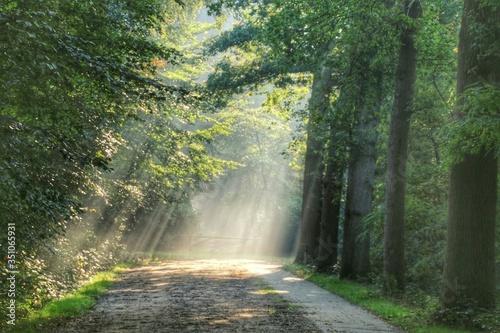 Fotografía Sunlight Falling On Street Amidst Trees In Forest