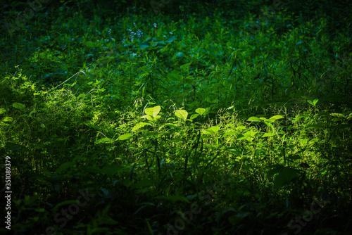 Valokuva 木漏れ日に照らされた草むら