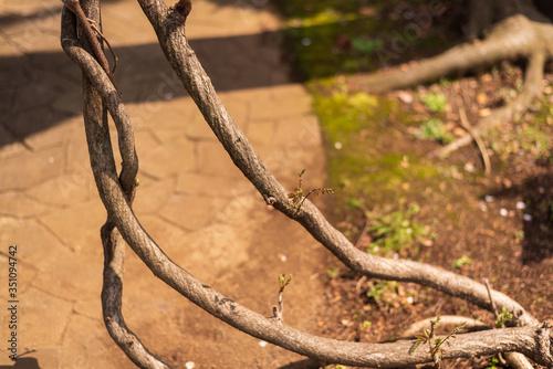 Photo 地上に出てしまった樹木の根