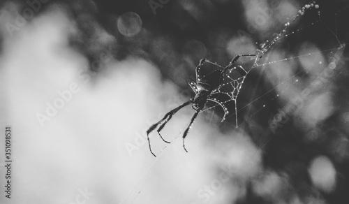 Slika na platnu Close-up Of Spider On Web