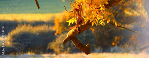 Obraz na płótnie Panoramic View Of Leaves On Twigs