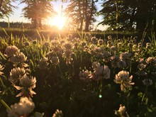 Flowers Growing On Field Against Bright Sun