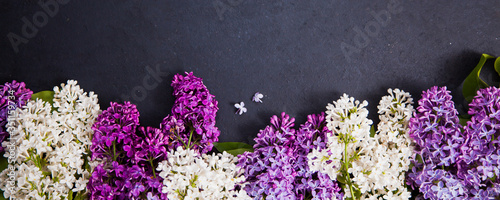 Fototapeta Purple and white lilac arrangement on dark background for banner. Wide floral picture with copy space for text. obraz