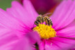 canvas print picture - Close-up Of Bee On Flower