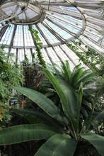 Botanical Garden, Glass Dome S...